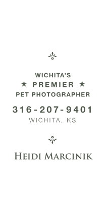 Wichita's Premier Pet Photographer, Heidi Marcinik, Wichita Pet Photography 316-207-9401